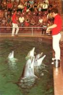 Animaux - Dauphins - Dolfinarium Bruges - CPM - Voir Scans Recto-Verso - Dolphins