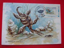 MTM Animaux Préhistorique Pliosaure Dessin Bruno Ghys La Maison Du Marbre Et La Géologie Rinxent Pliosaurus Pliosaurio - Prehistorics