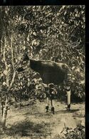Carte Neuve Illustrée N° 62. Vue 122  : Okapi - Stamped Stationery