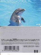 Japan, 105-231-186, Dolphin,  Fauna, Animal - Dolphins