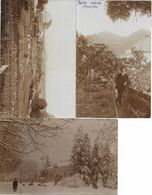 1909 - Spitz An Der Donau , 3 Stk. , Gute Zustand, 2 Scan - Krems An Der Donau
