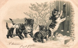 Animaux Humanisés - Groupe De Chats Frappant à La Porte - Carte Gaufrée - Cats