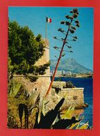 """C.P.M.( 83 ) """" LA SEYNE-sur-MER-TAMARIS  """" Musée Naval De Fort Balaguier - Jardin Exotique   X2phot - La Seyne-sur-Mer"""