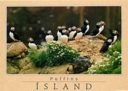 Islande - Puffins - Macareux Moines - Oiseaux - Carte Neuve - Iceland - CPM - Voir Scans Recto-Verso - Islande