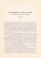 648 Adolf Schiber Deutschtum Im Süden Der Alpen Etymologie Artikel Von 1903  !! - Libri, Riviste, Fumetti