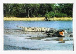 Ouganda   Crocodiles  - Années 1980s - Uganda