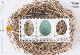Nederland - Eieren Van In Nederland Algemeen Voorkomende Vogels - Huismus/zanglijster/scholekster - MNH - Velletje 16 - Holanda