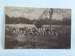 Carte Postale Non-écrite De La Foret De Senonches - Cerf Aux Abois  .. Lot150 . - France