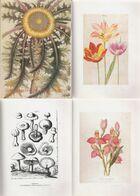Livres De Fleurs Du XVI Au XX Eme Siècle - Nature