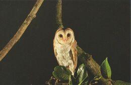 Postcard Singapore Night Safari Barn Owl - Birds