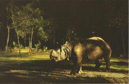 Postcard Singapore Night Safari Rhiniceros - Rhinoceros
