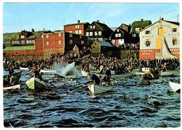 Whale Hunt In Torshavn Grindladrap - Isole Faroer