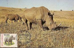 Mozambique & Maximum Card, Fauna, Rinoceronte,  Rhinocerontidae, White Rhino,  Chitengo  1976 (3680) - Mozambique