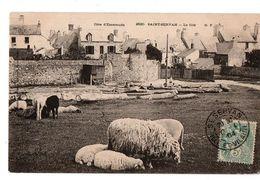 SAINT SERVAN LA CITE TROUPEAU DE MOUTONS  ANIMEE - Saint Servan