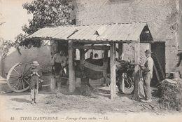 Types D' Auvergne -  Ferrage D' Une Vache - Frankreich