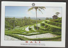 INDONESIE, Bali - Indonesia
