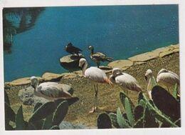BIRD - AK 383170 Las Palmas De Gran Canaria - Palmitos Park - Uccelli
