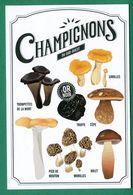 Champignons, Funghi, Girolles, Cepe, Truffe, Morilles, Bolet, Pied De Mouton, Trompettes De La Mort, Truffes - Mushrooms