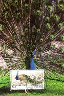 """"""" PAON DE CHINE """" Sur Carte Maximum De CHINE De 2004. Parfait état. CM - Peacocks"""