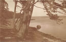 ESTONIE - VOSU - PHOTOGRAPHE TALINN 1927 - Estonie