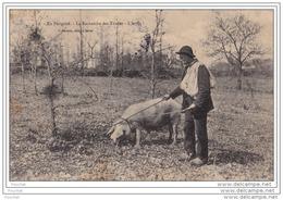 24) En Périgord - La Recherche Des Truffes - L'Arrêt  - (animée - Cochon - éditeur P. Baudrix à Sarlat) - Sarlat La Caneda