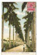 CUBA 2C PALMIERS CARTE MAXIMUM HABANA 1908 - Maximum Cards