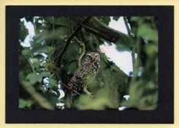 Oiseaux: Chouette Chevéche (Fonds D'Intervention Pour Les Rapaces) (voir Scan Recto/verso) - Oiseaux