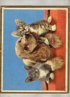 Almanach Des P.T.T  1967 - Lot Et Garonne - Chiot  Chatons - Phot Camera-Clix - Oberthur  Rennes - Calendari