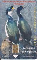 Télécarte 50U, Tirage 2000, Cormorans De Kerguelen - TAAF - Terres Australes Antarctiques Françaises