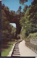 C. Postale - Natural Bridge - Circa 1950 - Non Circulee - A1RR2 - Etats-Unis