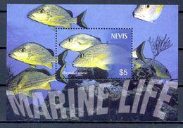 NEVIS    (FAU615) - Fische