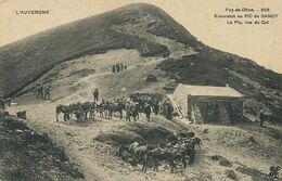 Promenade à Ane. Donkey Riding . Ascension Du Pic Du Sancy . Buron - Donkeys