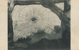 Araignée Spider Art Card  Dessin De Victor Hugo Notre Dame De Paris - Insects