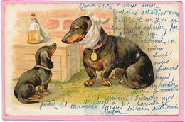CHIENS - Teckel A Mal Aux Dents - Hunde