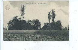 Tienen  Tirlemont Les Tombes Romaines - Tienen