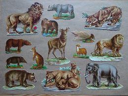 14 Découpis Animaux: Lions, Zèbres, Kangourous, Rhinocéros, Etc... - Animals
