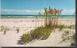 C. Postale - Sea Oats, Sand And Surf - NC Coast  - Circa 1960 - Non Circulee - A1RR2 - Etats-Unis