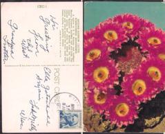 C. Postale - USA - Arizona Rainbow Cactus - 1976 - Circulee - A1RR2 - Cactus