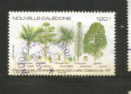 1269  Palmiers     (clasyverouge23) - Nuova Caledonia