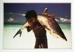 Maldives Requin Blanc Shark    Années   80s - Maldive
