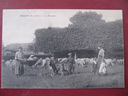 CPA - THOIRY -  LES BRUYERES - BERGER, CHIEN ET MOUTONS - Thoiry