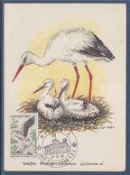 Carte Postale 1er Jour La Cigognes Et Les Cigogneaux Sur Le Nid Monaco 12.12.62 N°590 Protection Des Oiseaux Utiles - Cartoline Maximum
