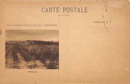 20-9320 : CULTURES MEDICINALES DAUSSE. LE FENOUIL. - Heilpflanzen