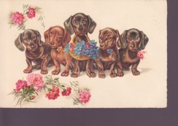 5 Petits Chiens Avec Fleurs- Pittius - Chiens