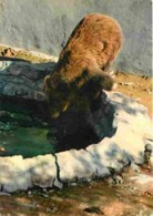 Animaux - Ours - Marvejols - Parc Naturel Du Gevaudan - Ours Brun D'Europe - CPM - Voir Scans Recto-Verso - Bears