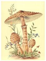 (F 9) Mushrooms / Champignon - Hongos