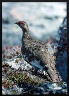 Greenland Birds  Cards ( Lot 189 ) - Greenland
