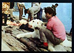 Greenland   Cards Hunter With Shot Polar Bear( Lot 198 ) - Groenlandia