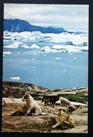 Greenland   Cards Husky Dogs And Puppies ( Lot 198 ) - Greenland