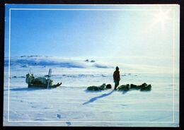 Greenland  Cards Dog Sledge In Greenland( Lot 201 ) - Greenland